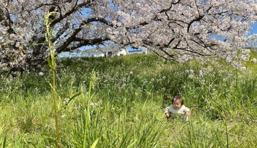ちょっと特別な、春の散歩